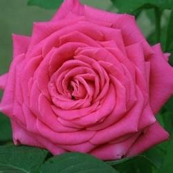 Lolita Lempicka ®
