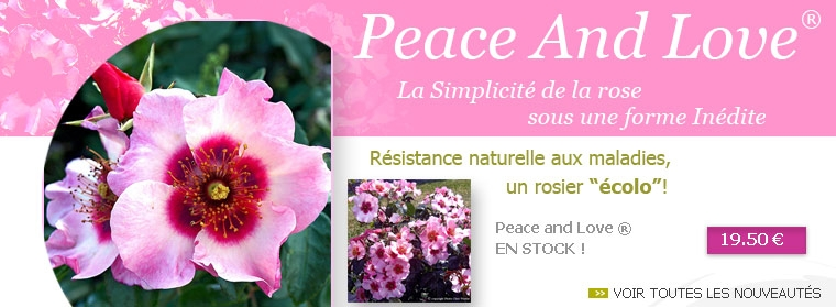 Rosier Peace And Love